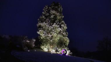 Mammutbaum Fachsenfeld