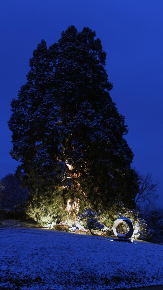 mammutbaum05
